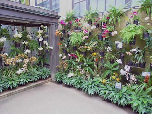Orchid wall  Dont you want one Marry a duPont Many