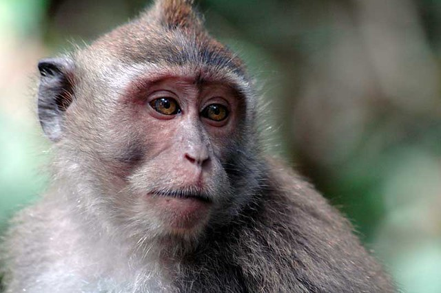 mksadface Monkey sad face Rebecca Marshall Flickr