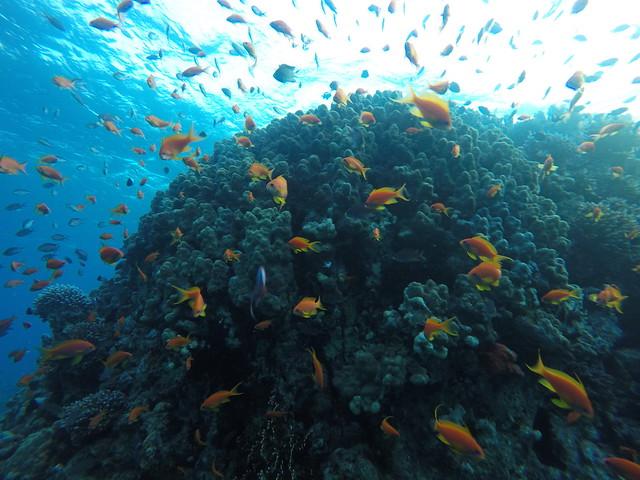 Aqaba diving dag 2 (13)