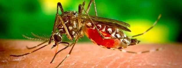 Desarrollan inteligencia computacional para combatir el dengue