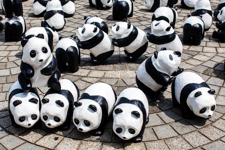 1600 pandas+ korea