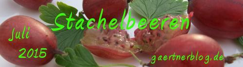 Garten-Koch-Event Juli: Stachelbeeren [31.07.2015]
