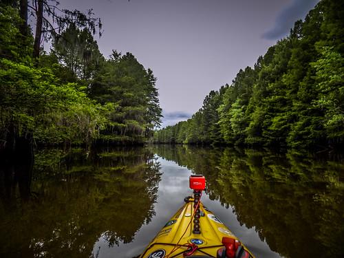 Sparkleberry Swamp-164