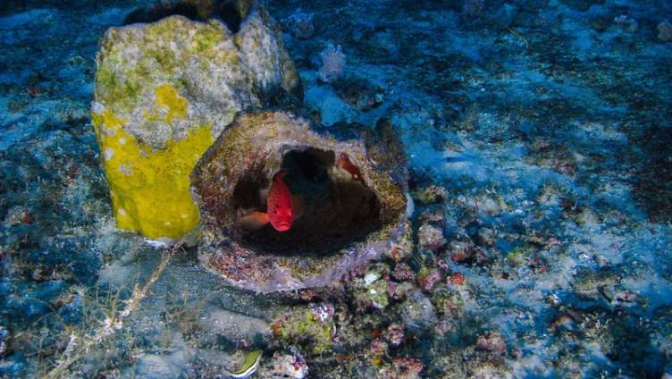 Com ajuda de submarino, ONG divulga as primeiras fotos dos corais da Amazônia