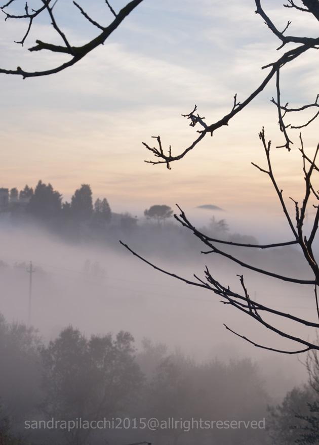 nebbia4
