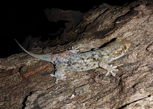 132206-gecko-2