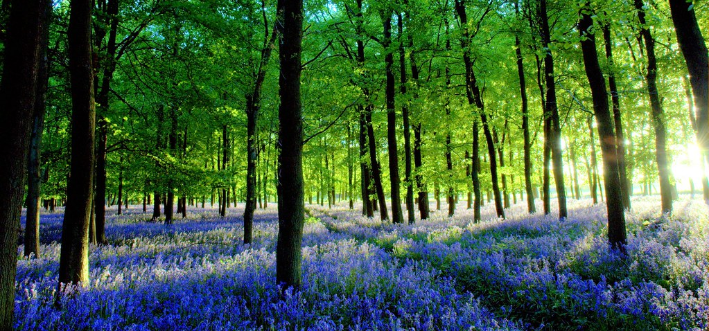 3d Wallpaper Low Bright Bluebell Dusk The Low Sun Was Casting Amazing Long