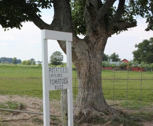 Amish Community, Ethridge TN