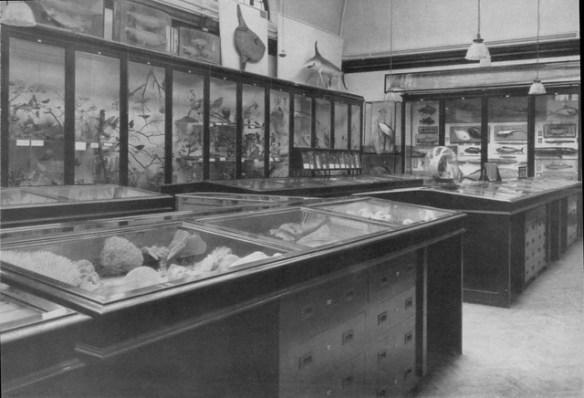 Dorman Memorial Museum - Photo 4