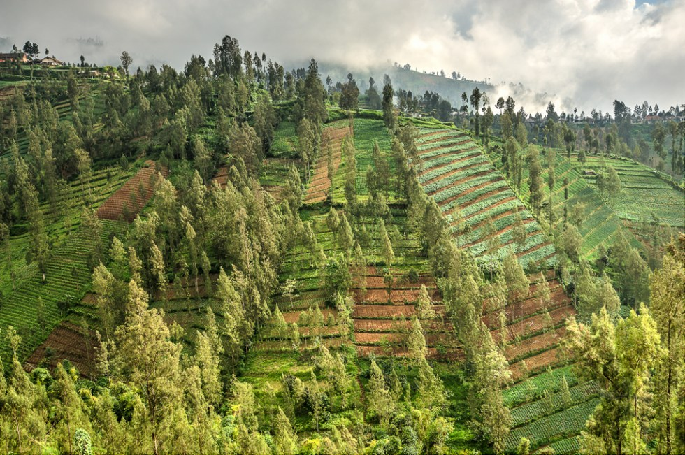 En Route to Bromo Cottage