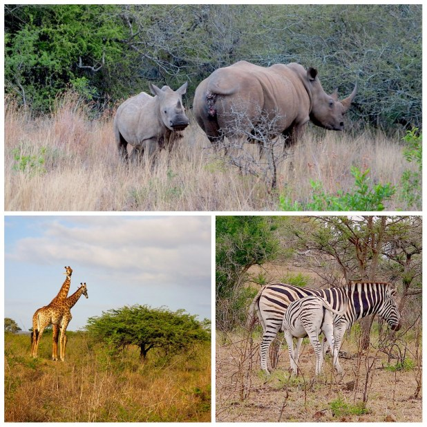 Fauna Safari en Sudafrica