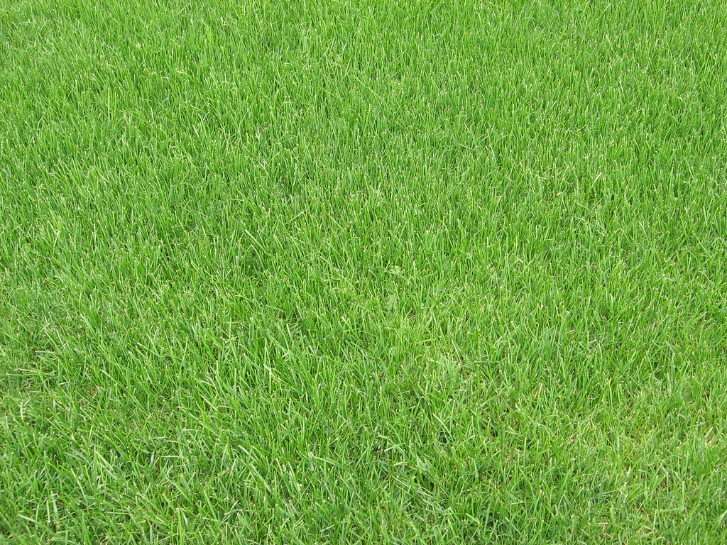 3d Wallpaper With White Background A Patch Of Grass Iirraa Flickr