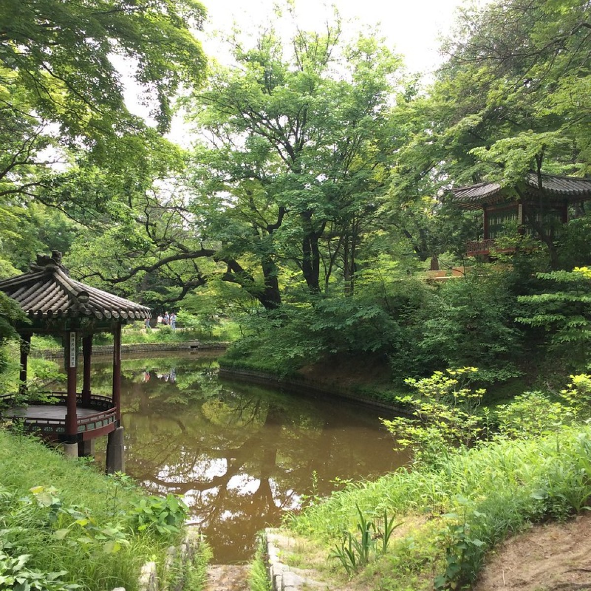 two gazebos across a pond covered with green trees in Huwon