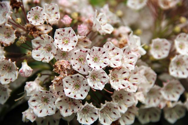 20150607_WV_Botanic_Gardens_005