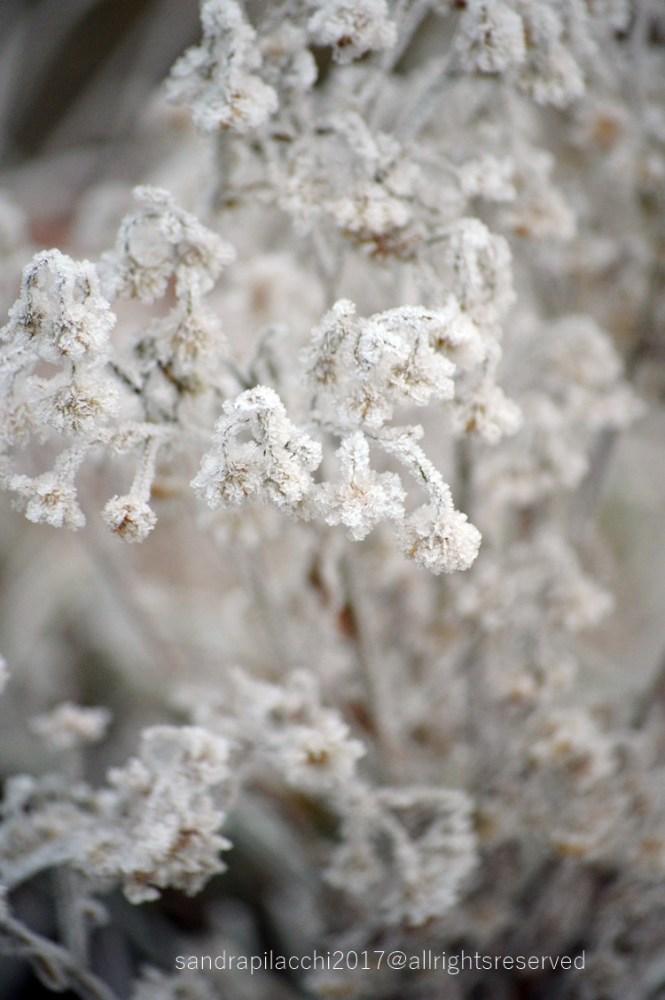 ghiaccio DSC_4449