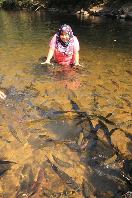 Ikan Kelah Sanctuary
