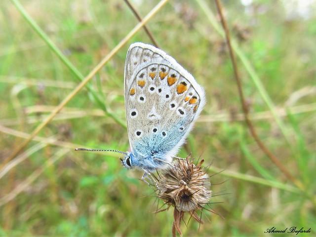 Butterfly 1120