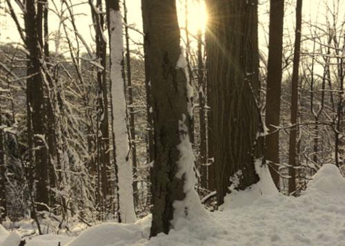 Winter workspace of @JLenniDorner Copyright J Dorner