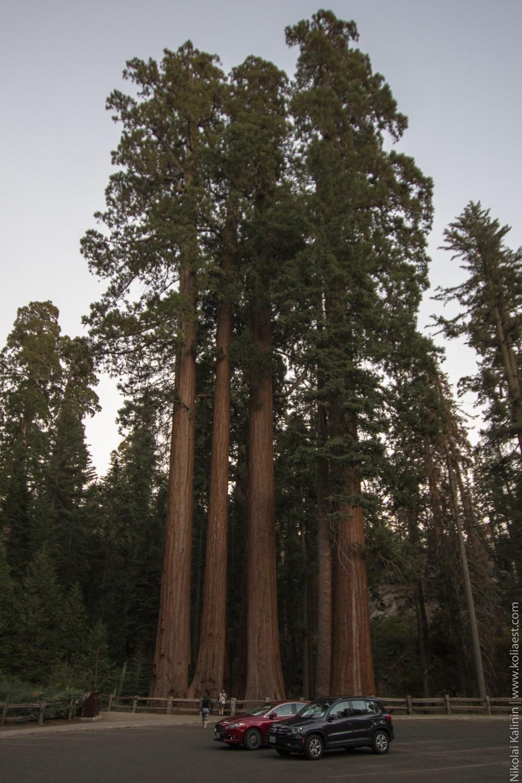 Sequoia-97