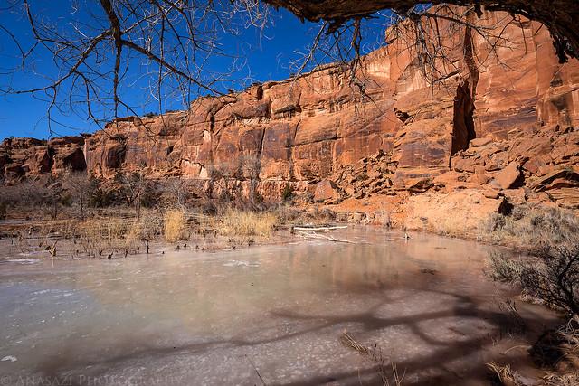 Icy Beaver Pond