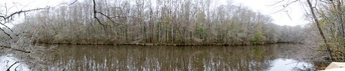 Congaree Swamp with Lowcountry Unfiltered-87