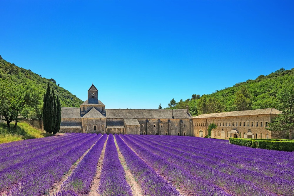 Lavender Field- Chateau France