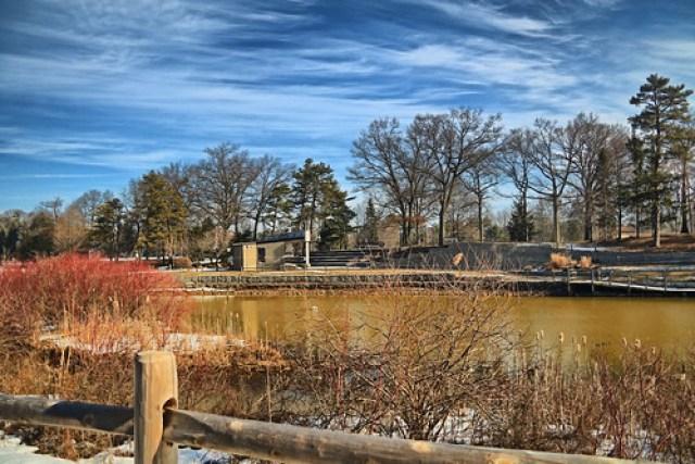 Cook Park Landscape