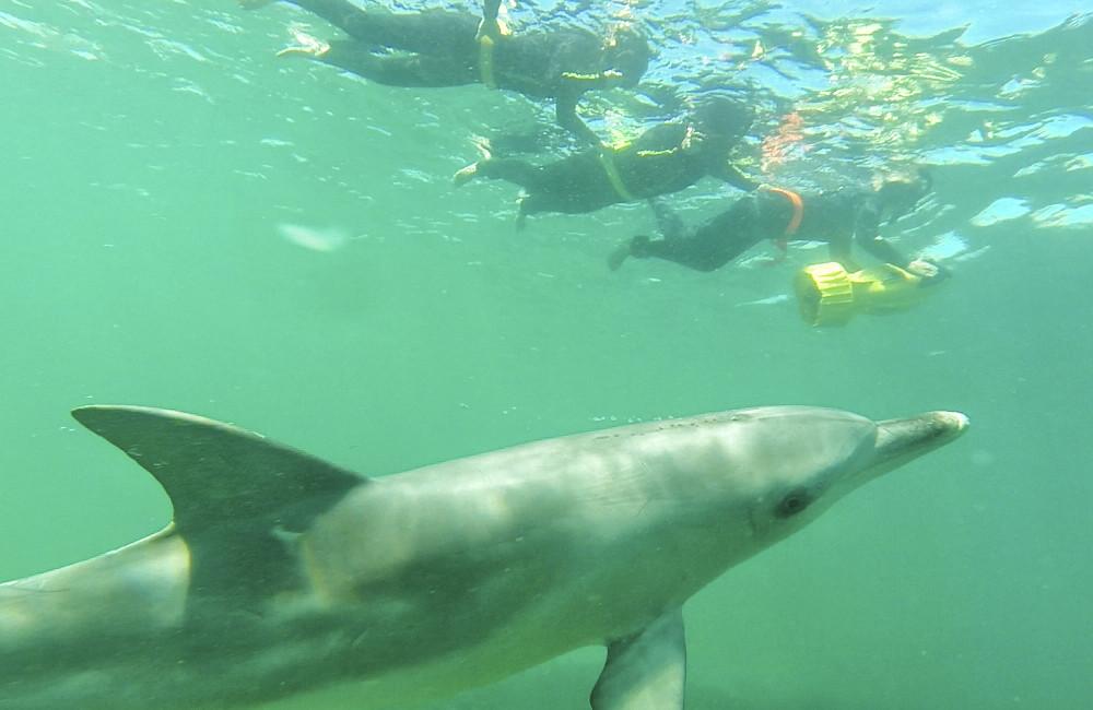 delfiiniuinti