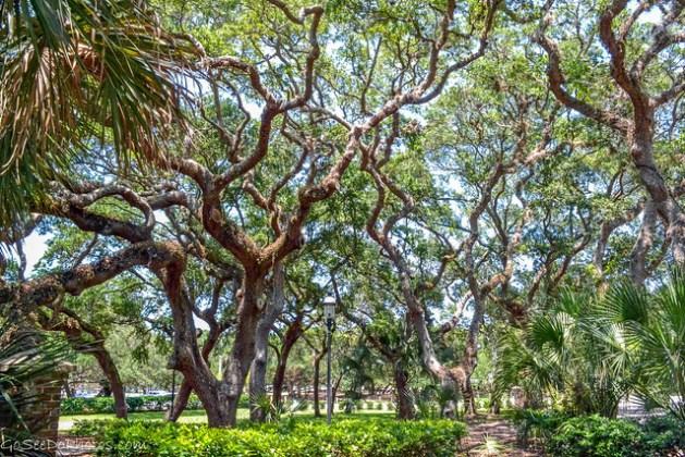 St. Augustine Trees