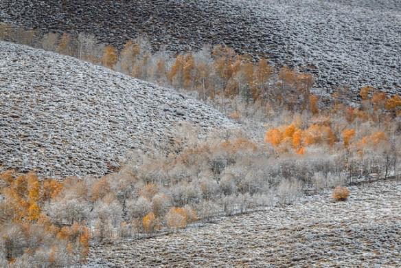 Snowy Fall Aspen