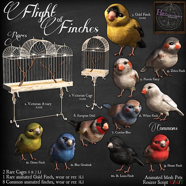 Flight of Finches