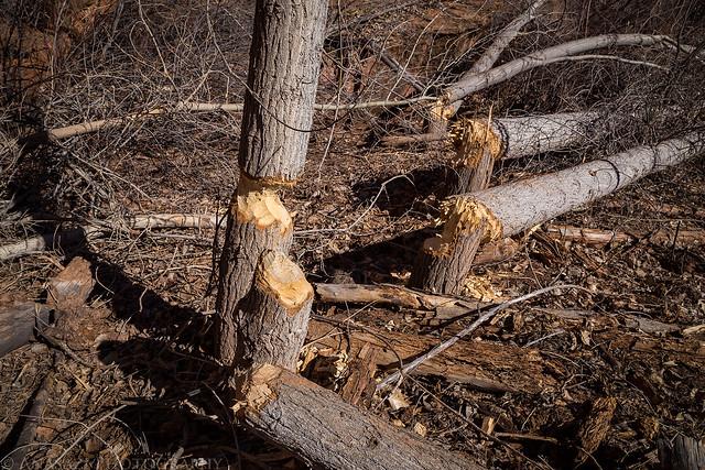 Busy Beavers