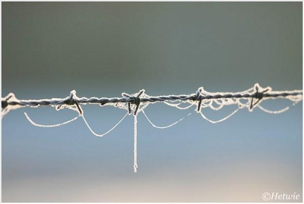 prikkeldraad met spinnenwebben met rijp