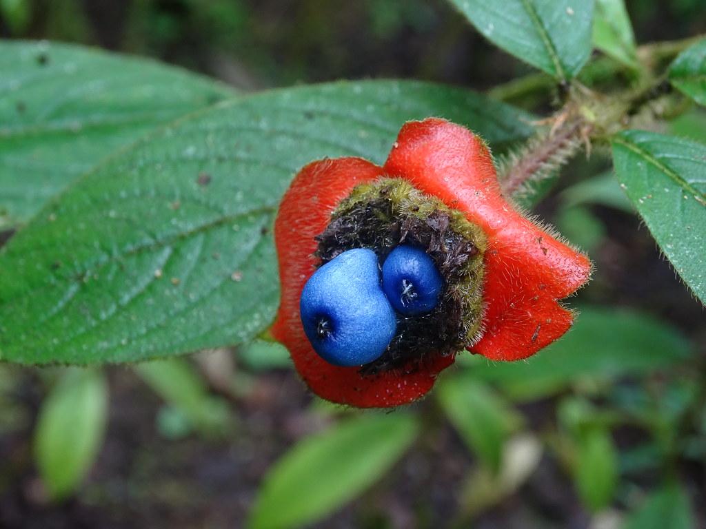 La Fortuna Ecocentro Danaus Reserva Biológica flores flora Costa Rica 14