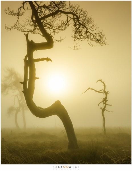 Wanneer een boom om de zon heen gebogen is (63mm; ISO100; f/11; t=1/320sec; Lee soft GND0,9)