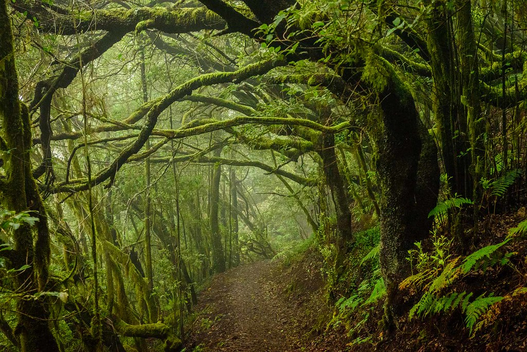 Spooky Fall Wallpaper Cloud Forest Near El Cedro La Gomera Walking Through