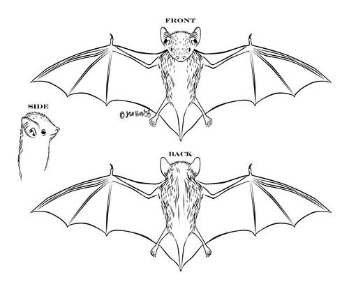 Diagram Of Camera