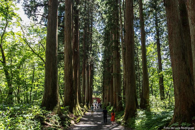 Santuario-Togakushi-Nagano-43