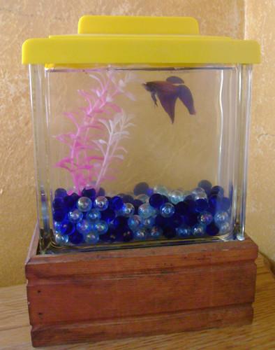 Glass Block Fish Tank  I got this at a Flea Market a long