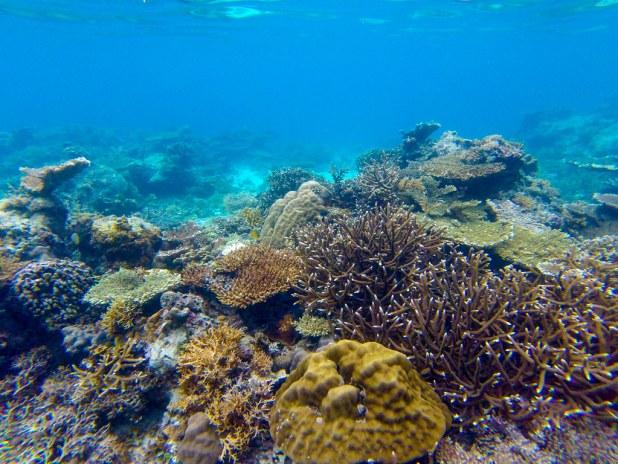 Snorkel en El Nido