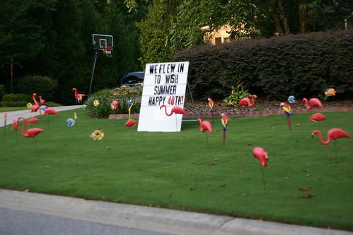 American Practical Joke Plastic Lawn Flamingos This Is