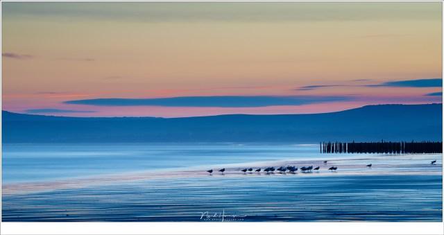 Meeuwen op het strand van Cap Gris Nez. Dit was de enige kleurrijke zonsopkomst van het weekend (200mm | ISO50 | f/11 | t=25sec met grijsfilter)