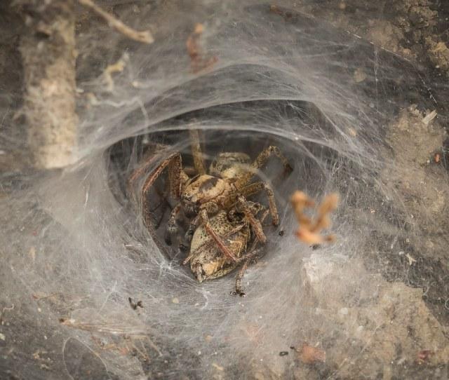Spider Porn By Anne Richardson Spider Porn By Anne Richardson