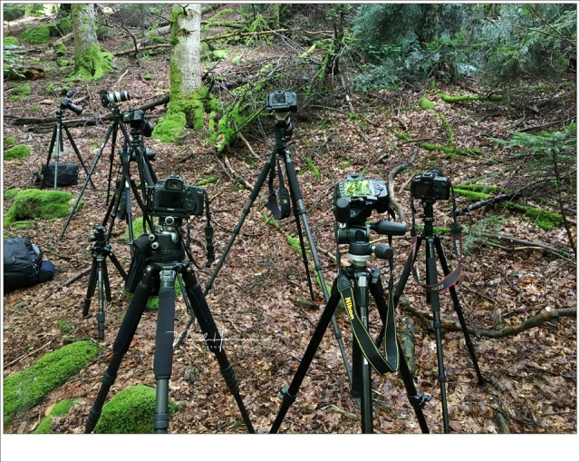 Statieven, tripods; een hele groep verzameld tijdens mijn Masterclass Landschapsfotografie in de Auvergne