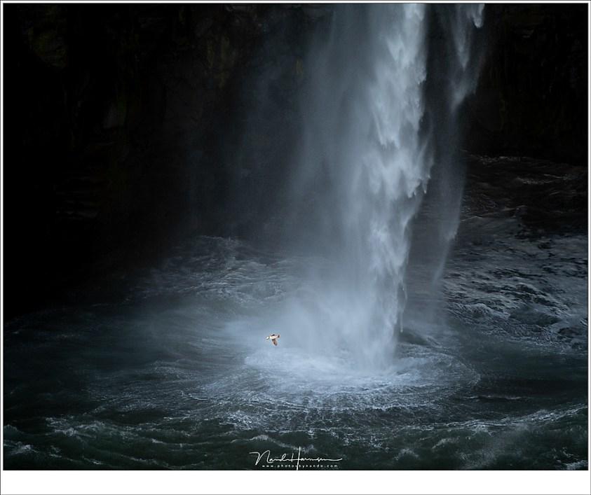 Rondjes om de waterval heen, van rots naar rots scherend over het water. Ze zijn klein, ze zijn snel, en ze zijn grappig om te zien. Geen wonder dat ze populair zijn. (200mm   ISO100   f/2,8   1/250)