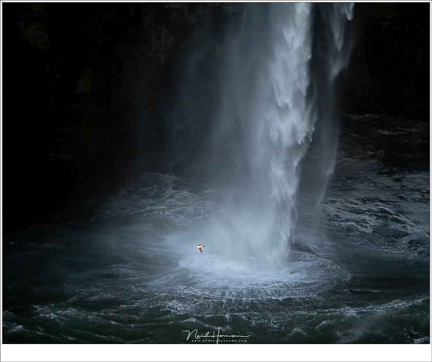 Faeröer eilanden - deel 2, Rondjes om de waterval heen, van rots naar rots scherend over het water. Ze zijn klein, ze zijn snel, en ze zijn grappig om te zien. Geen wonder dat ze populair zijn. (200mm | ISO100 | f/2,8 | 1/250)