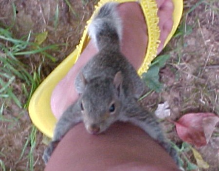 Baby Squirrel Wants To Climb Up My Leg He Started