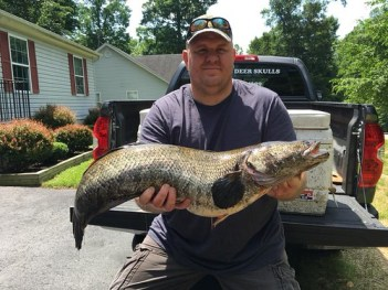 Photo of man holding state record snakehead