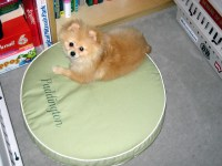 LL Bean dog bed   We bought the smallest size dog bed from ...