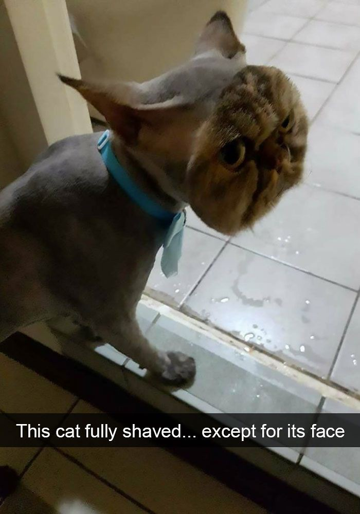Image of: Paw Sible 10 Hilarious Cat Snapchats That Are Impawsible Not To Laugh At Flickr 10 Hilarious Cat Snapchats That Are Impawsible Not To Lu2026 Flickr